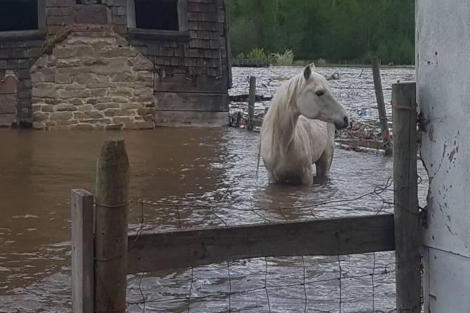 flooding-bc-horse